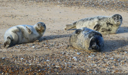 Wildlife at the beach family holiday rental Norfolk | sextons place