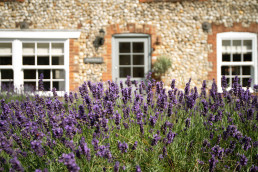 Sextons Place front lavender